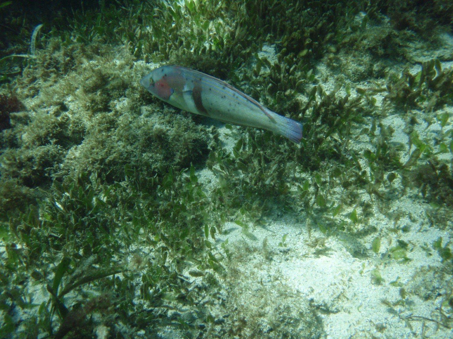 Rottnest Snorkeling