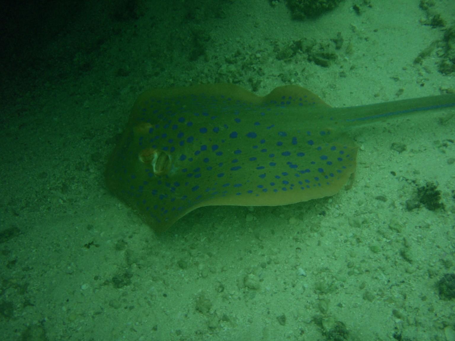 Stingray Snorkeling