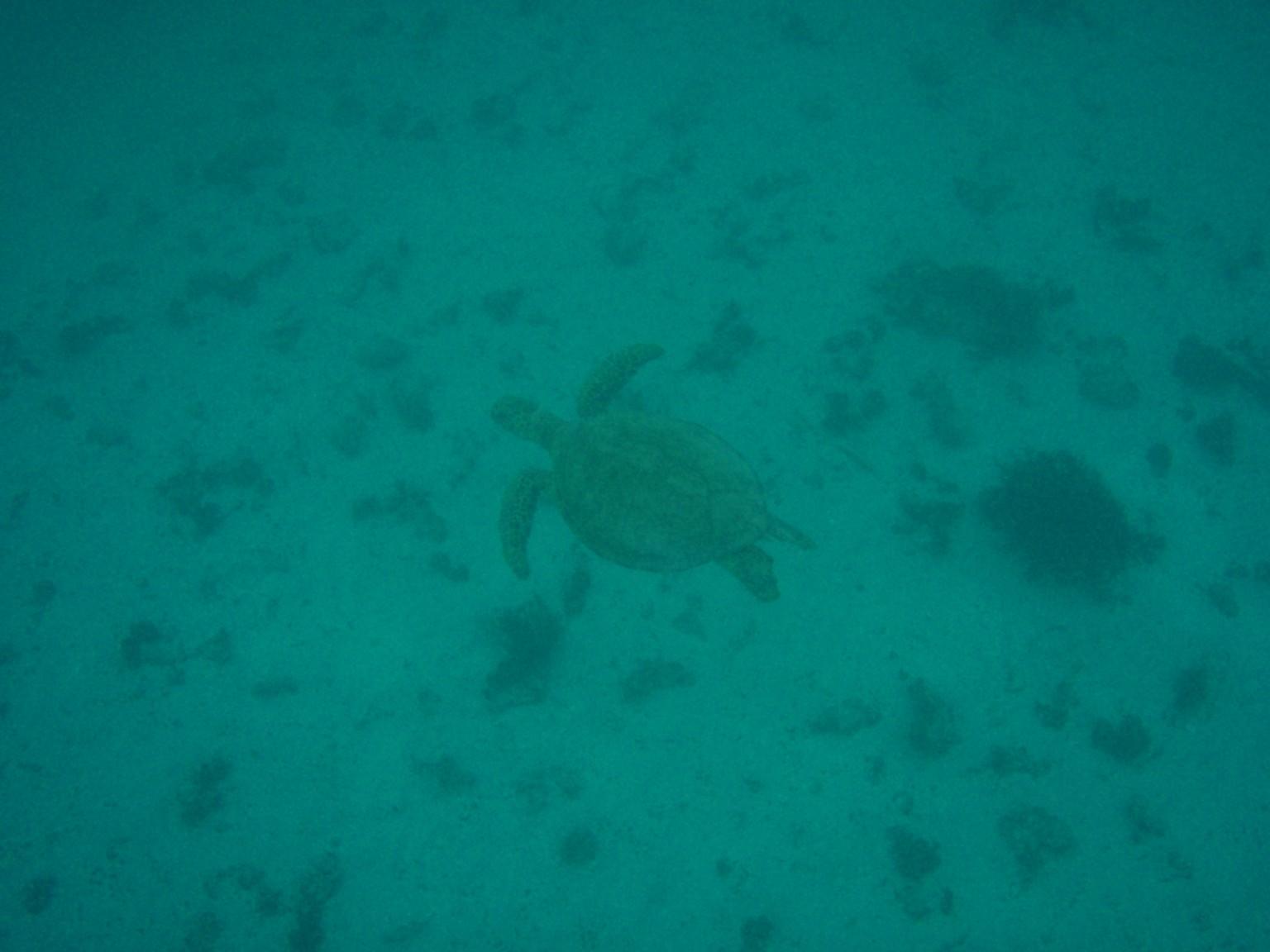 Coral Bay Turtles