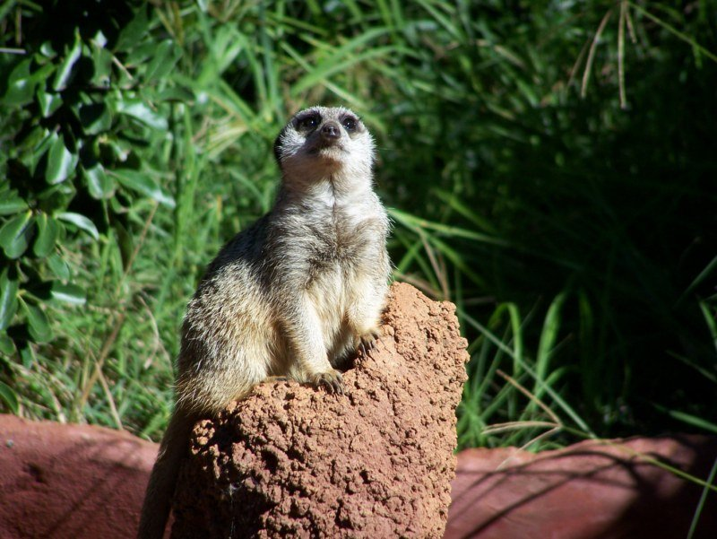Perth Zoo Animals