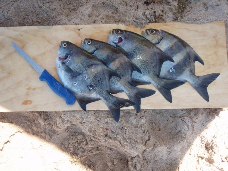 Spearfishing Sweep