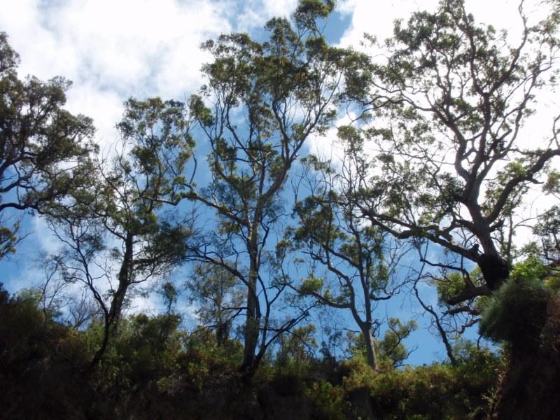 Margaret River Forest