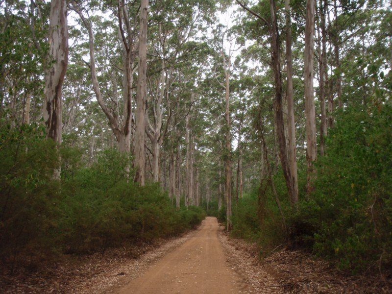 Karri Forest in WA