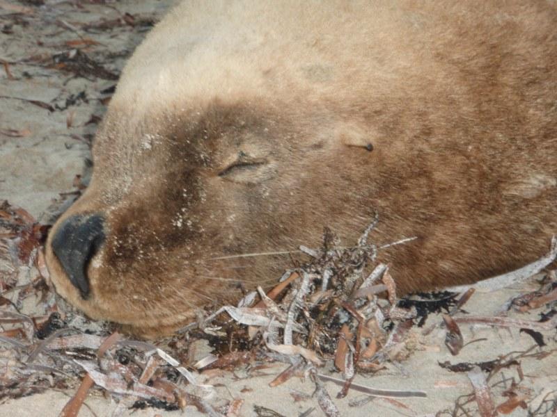 Seals in Perth