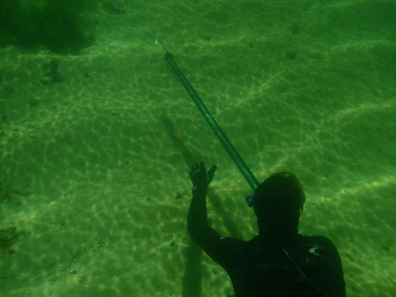 Spearfishing in Perth