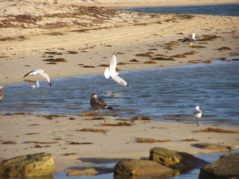 Bird Watching in Western Australia