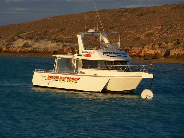Coral Bay Manta Ray Tours
