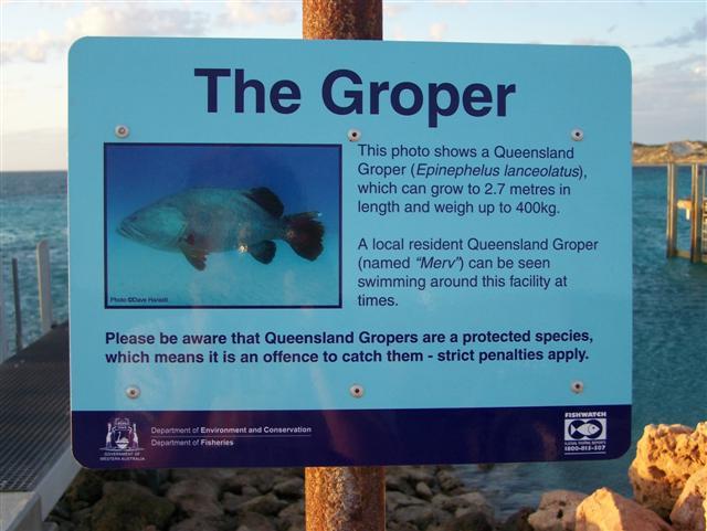 Coral Bay Groper
