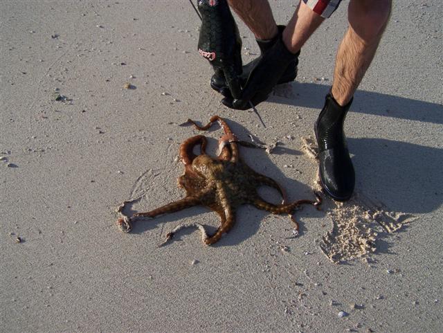 Catching an Octopus