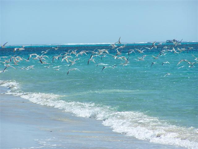 Birds at Coral Bay