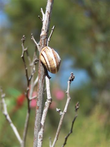 Perth Flora Photography