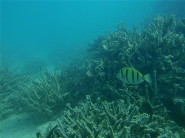 Coral Bay Underwater