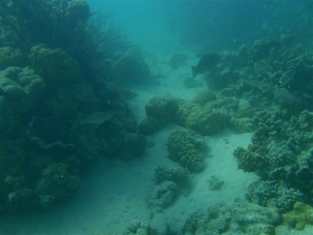 Snorkeling at Coral Bay