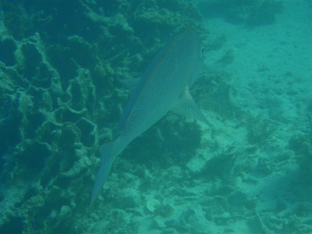 Coral Bay Fish