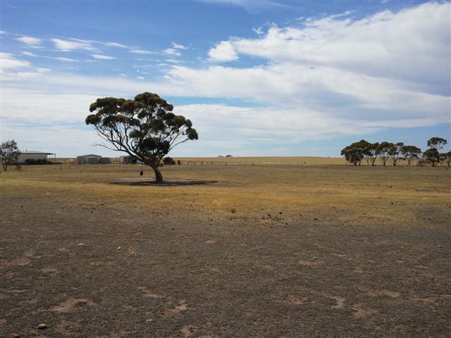 Barren and dry farm land in WA