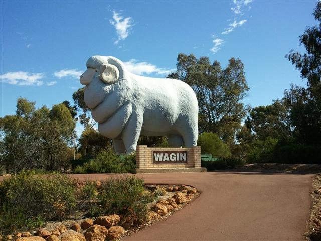 Wagin huge ram