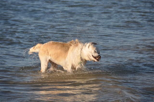 Dog Beach in Perth