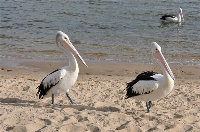 Walpole's local birds