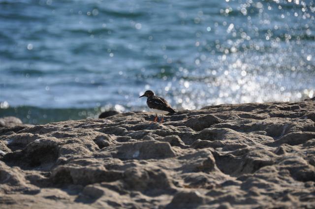 Birds at Point Peron