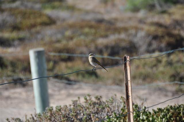 Bird Watching in Rockingham