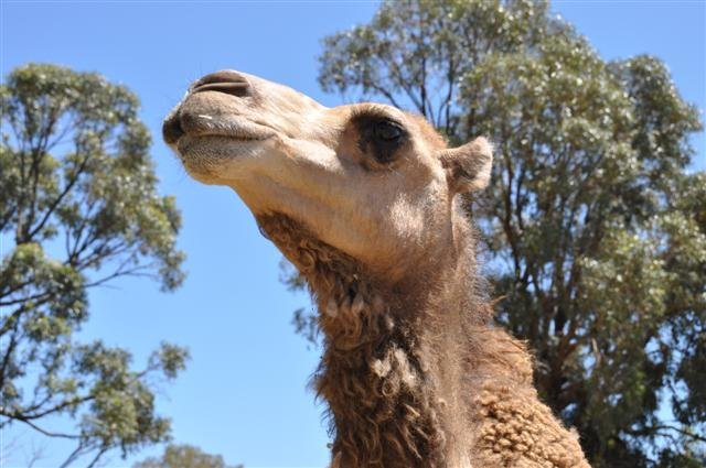 A Camel at Marapana Wildlife Park