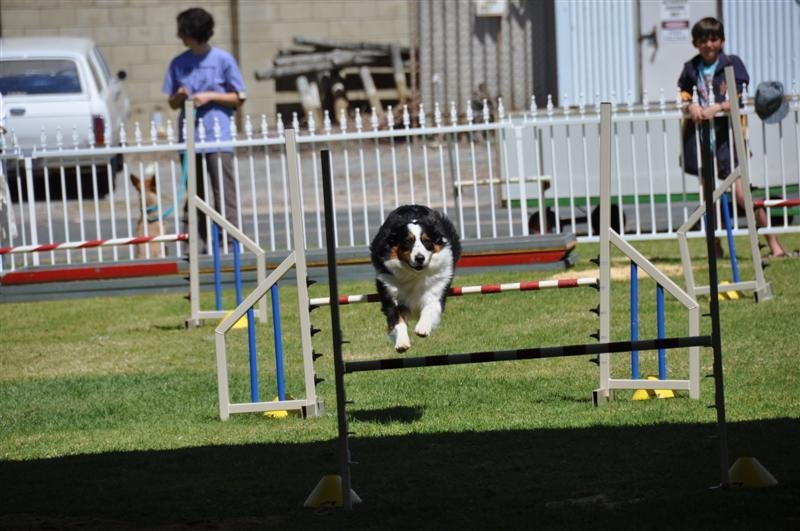 Dog Courses at the Royal Show