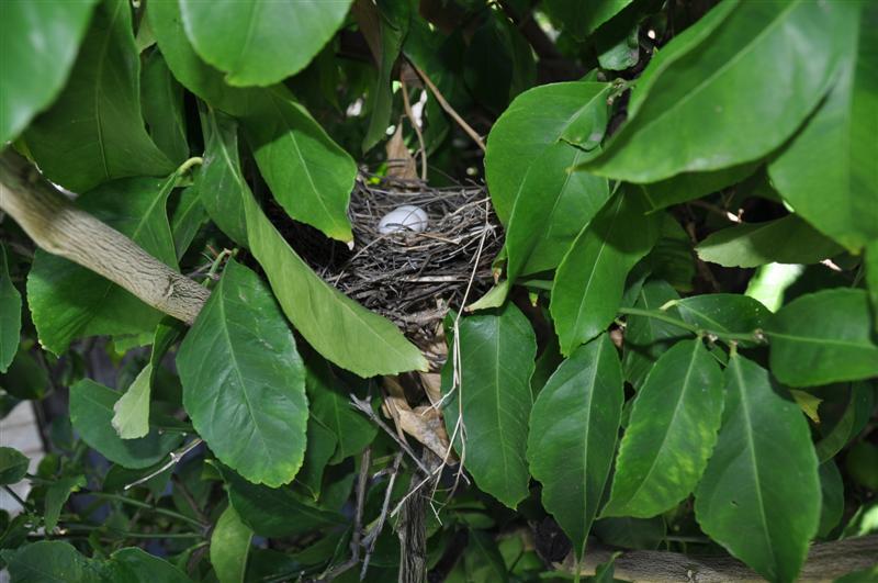 Dove Eggs