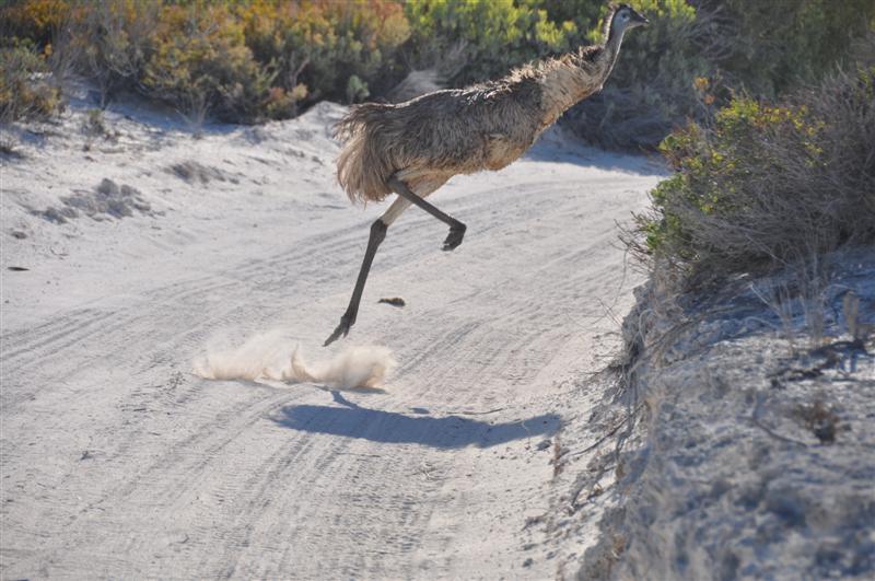 Running Emu