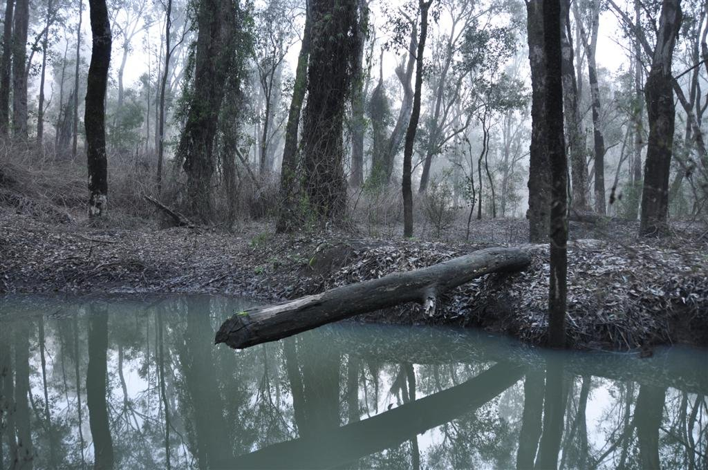 A Misty Morning Along the Murray River