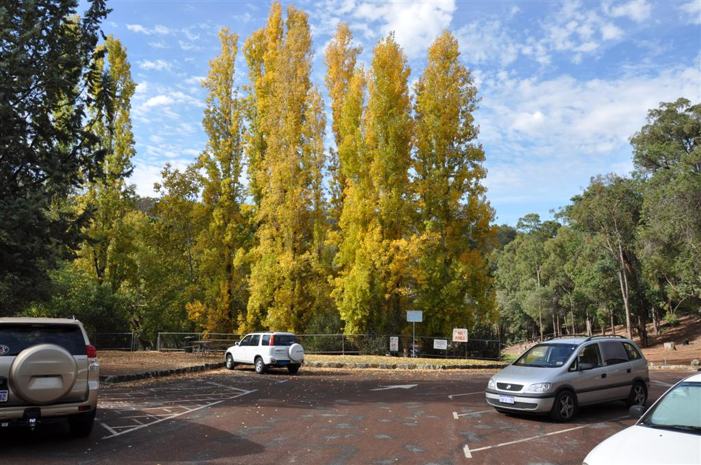 Awesome Coloured Trees at Serpentine