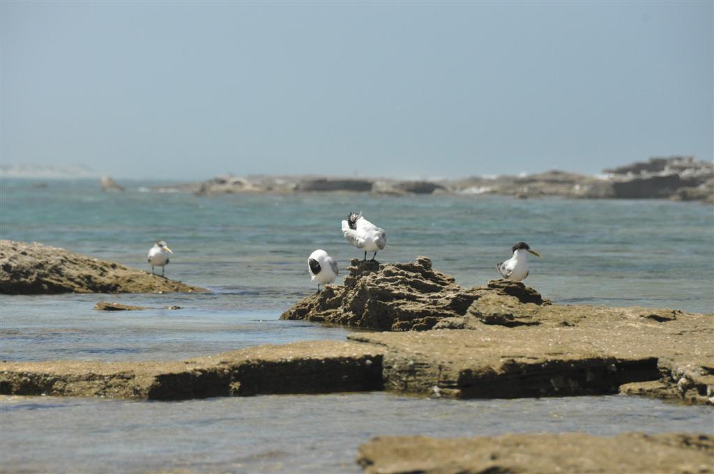 Birds at Lucky Bay