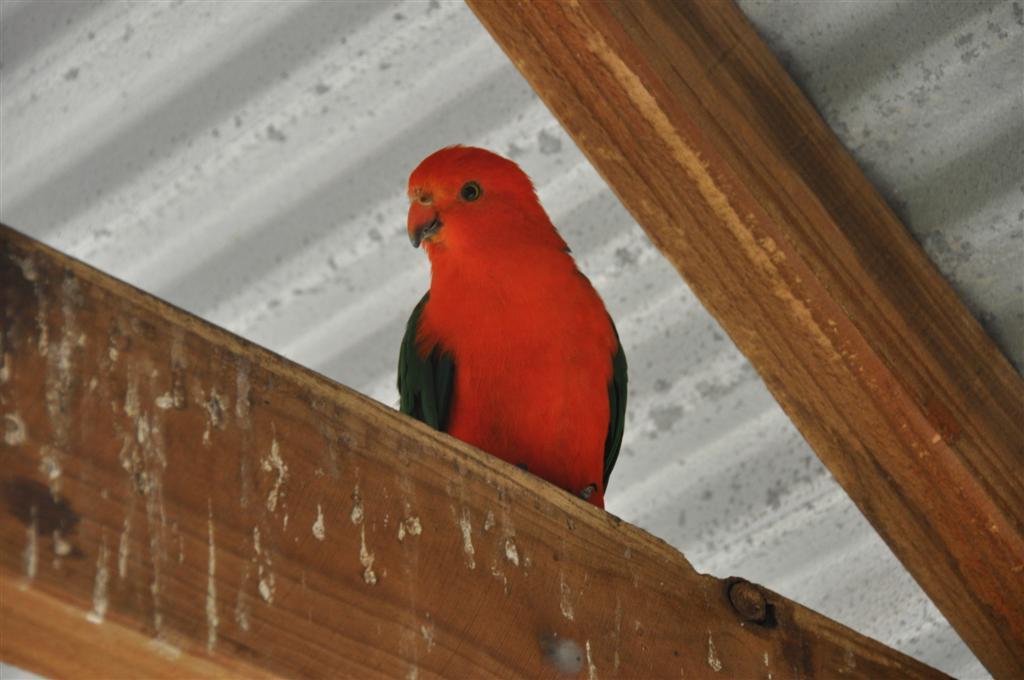 Bright Birds at Kalbarri