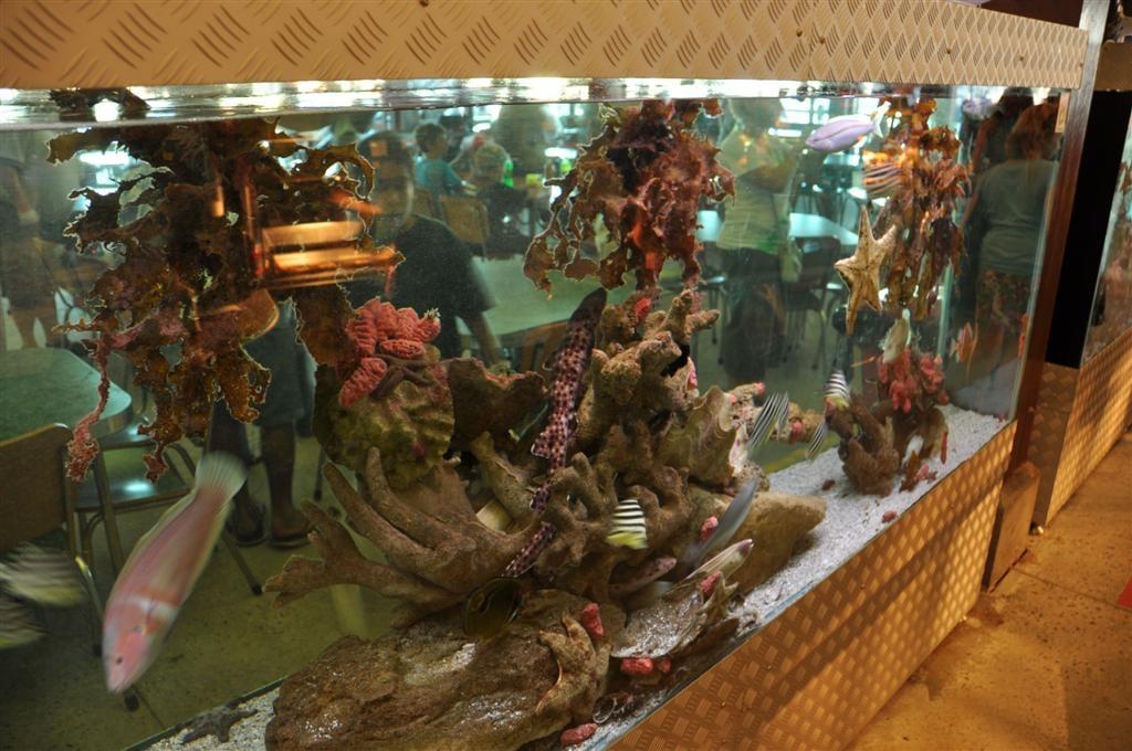Cicerellos Aquariums