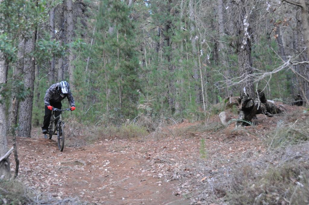 Downhill Mountain Biking Near Dwellingup