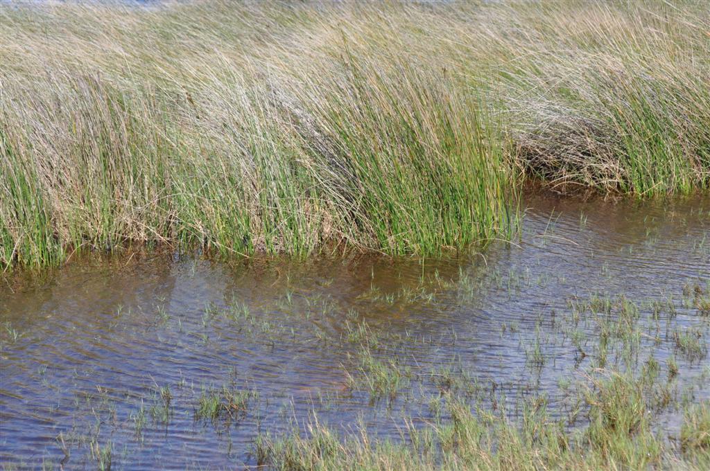 Hill River Reeds