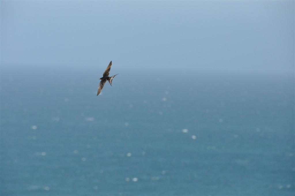 Little Birds Effortlessly Gliding in the Wind