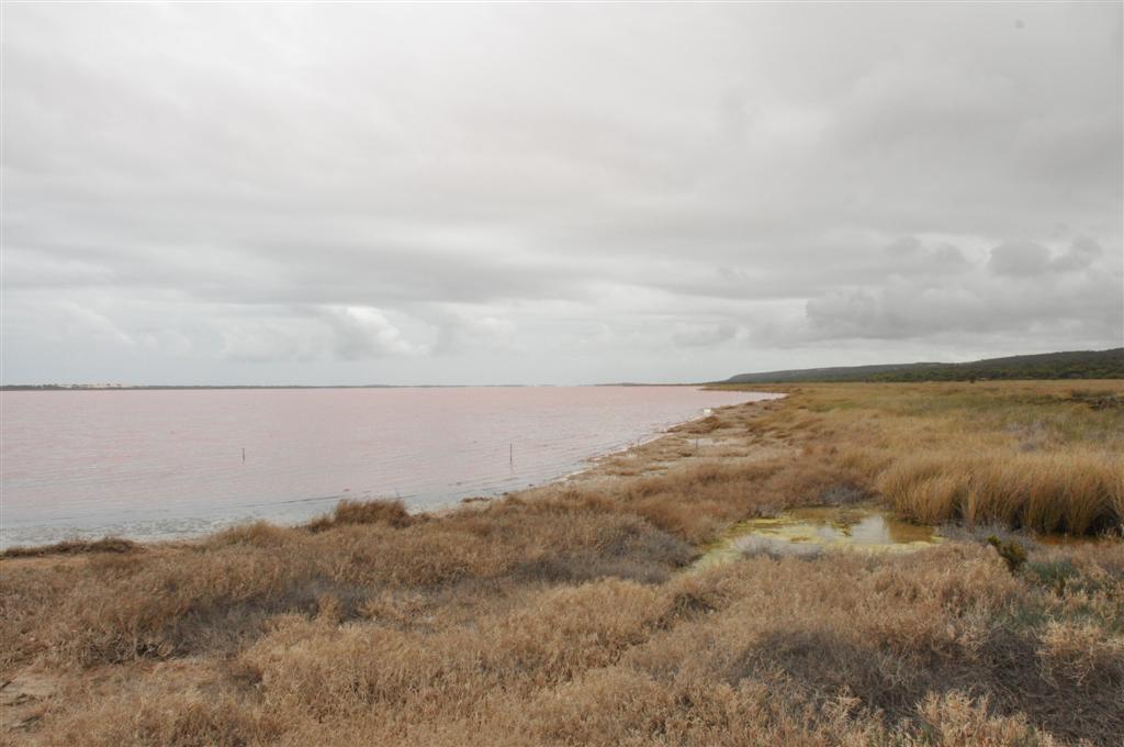 Looking at the Pink Lake