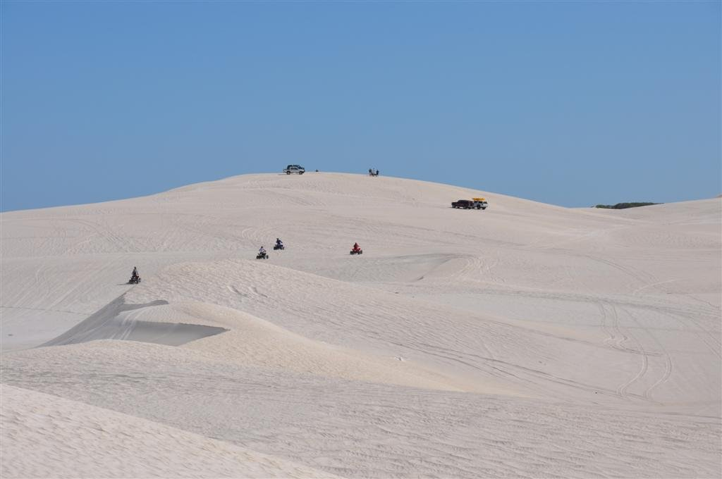Plenty of Activity in Lancelin Sand Dunes