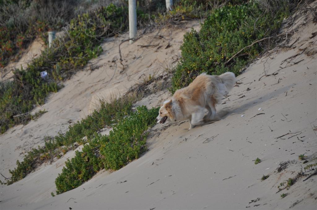 Walking the Dog at Point Peron