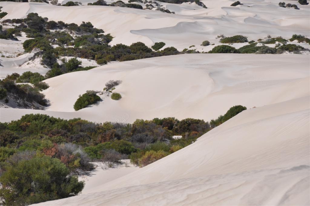 Where Bush Meets the Dunes
