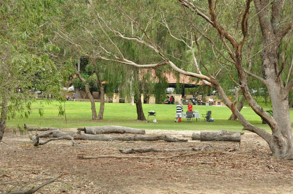 Kings Park lawn