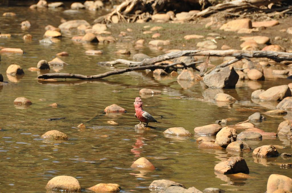 Walyunga National Park wildlife