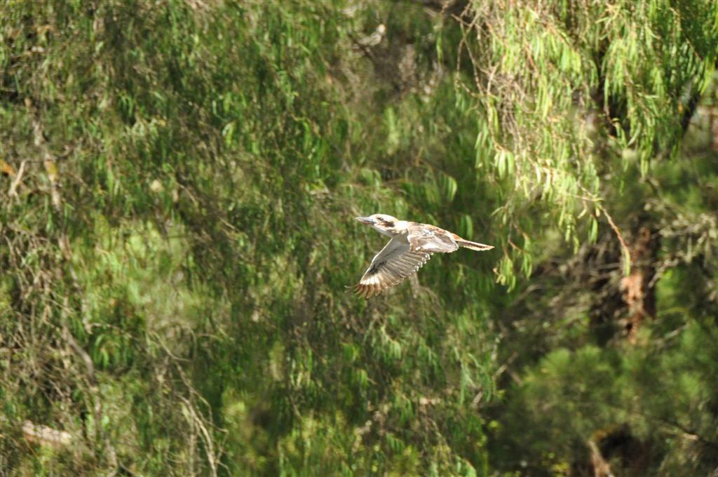 Pemberton bird life