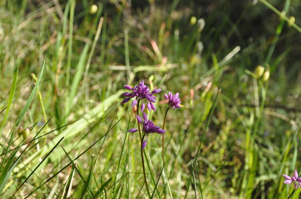 WA flowers