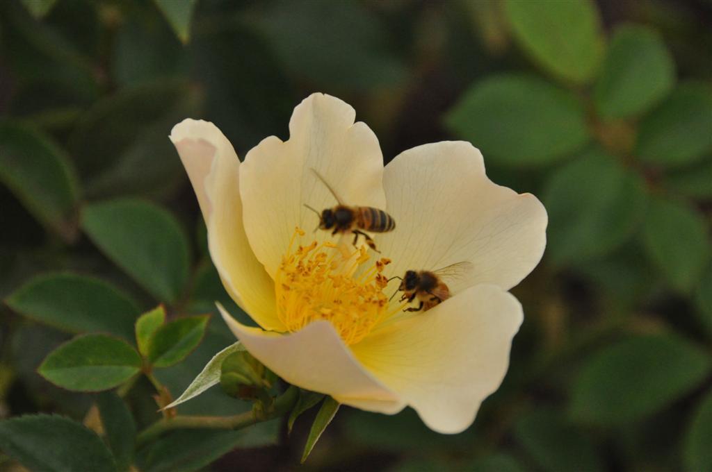Bees enjoying the flowers