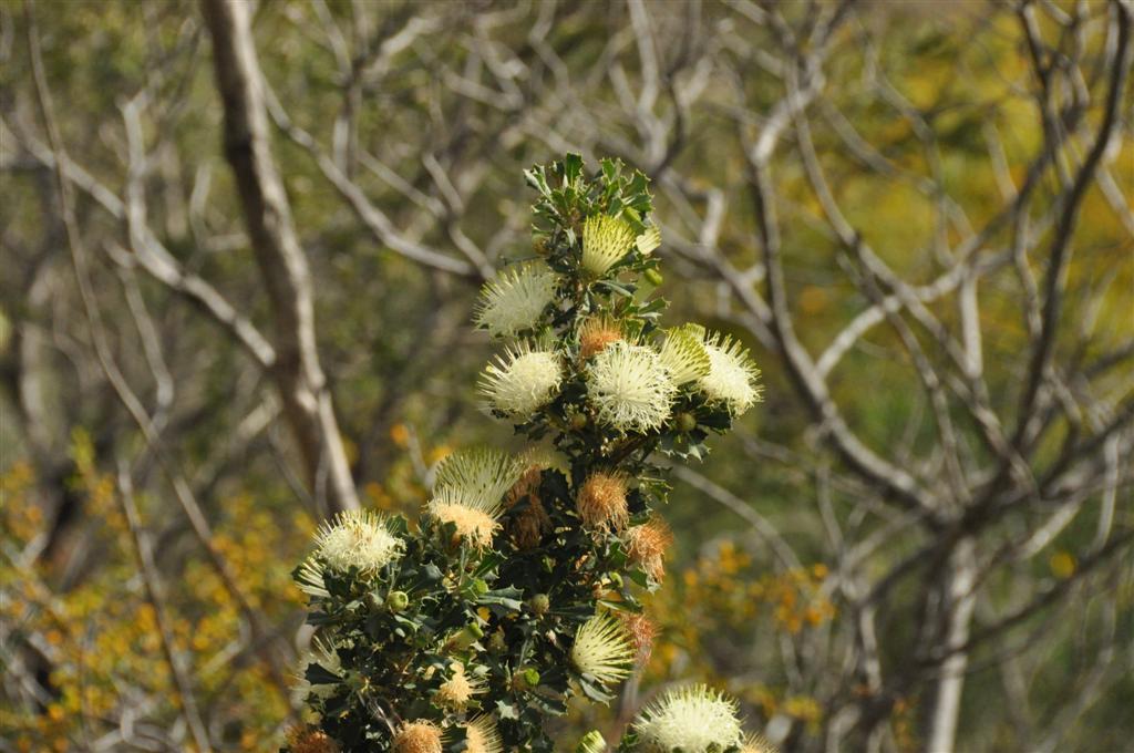 Australia's unique flora