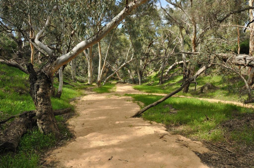Walking through Walyunga National Park