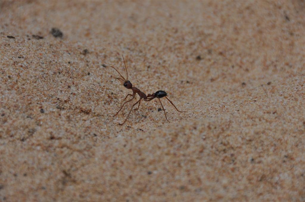 Nasty ant!