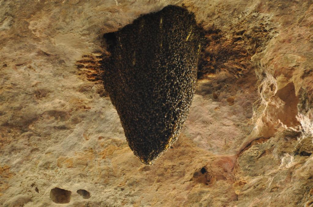 Stockyard Gully National Park bee hives
