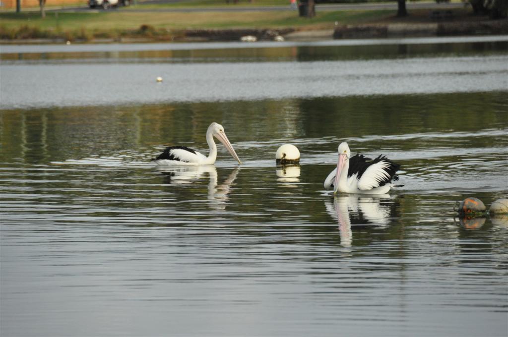 Augusta Inlet bird life